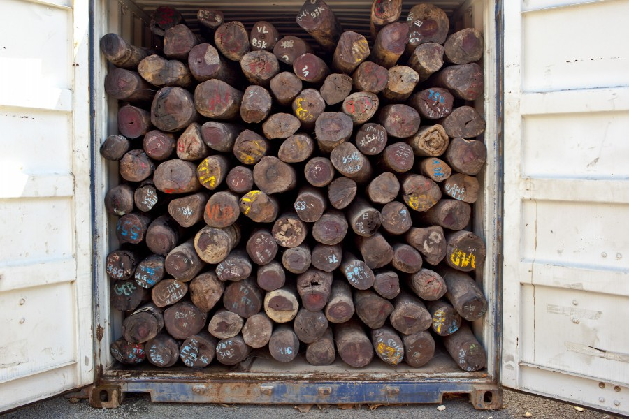 Illegally-felled rosewood logs await transit to markets abroad